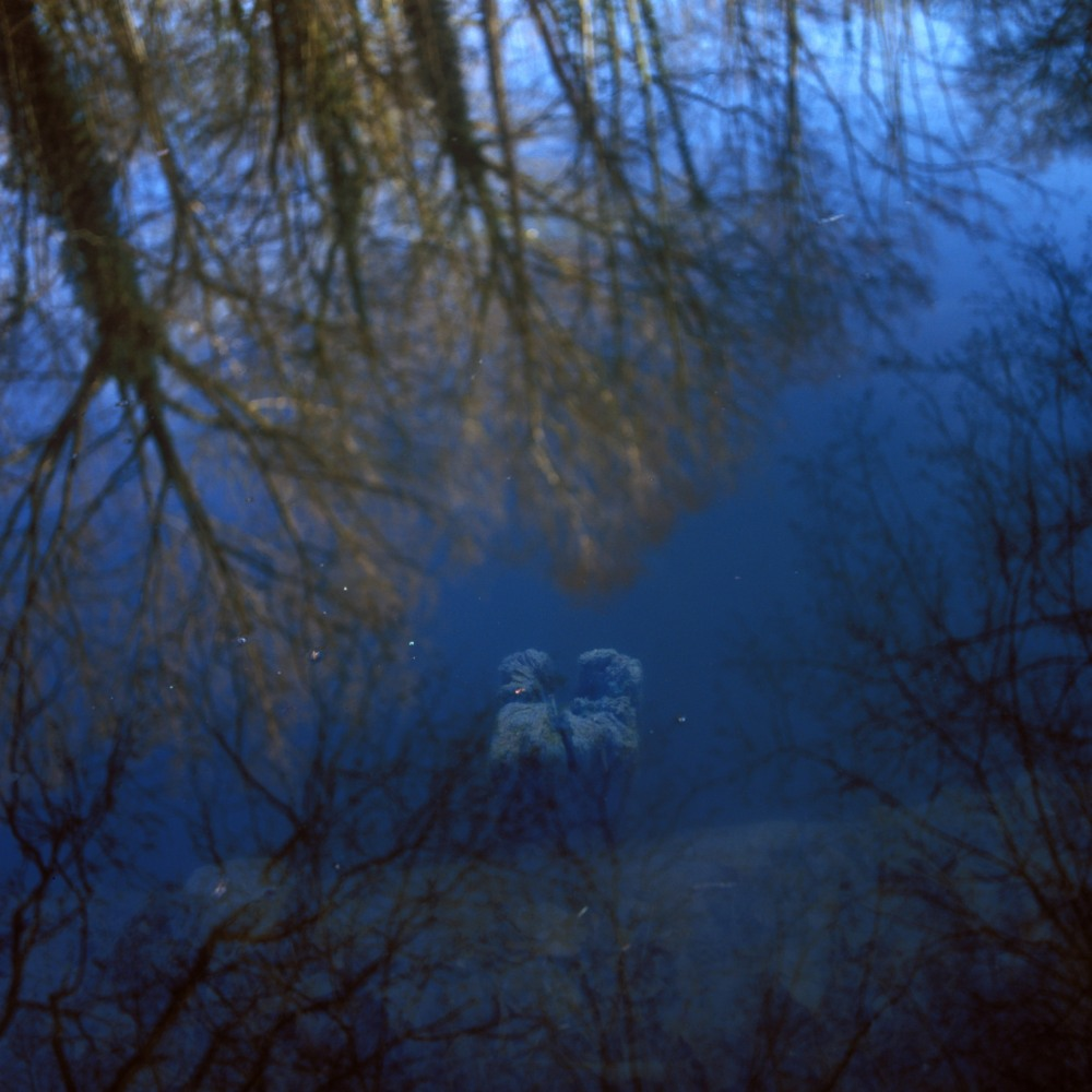 photographie d un bois mort dans l eau en automne